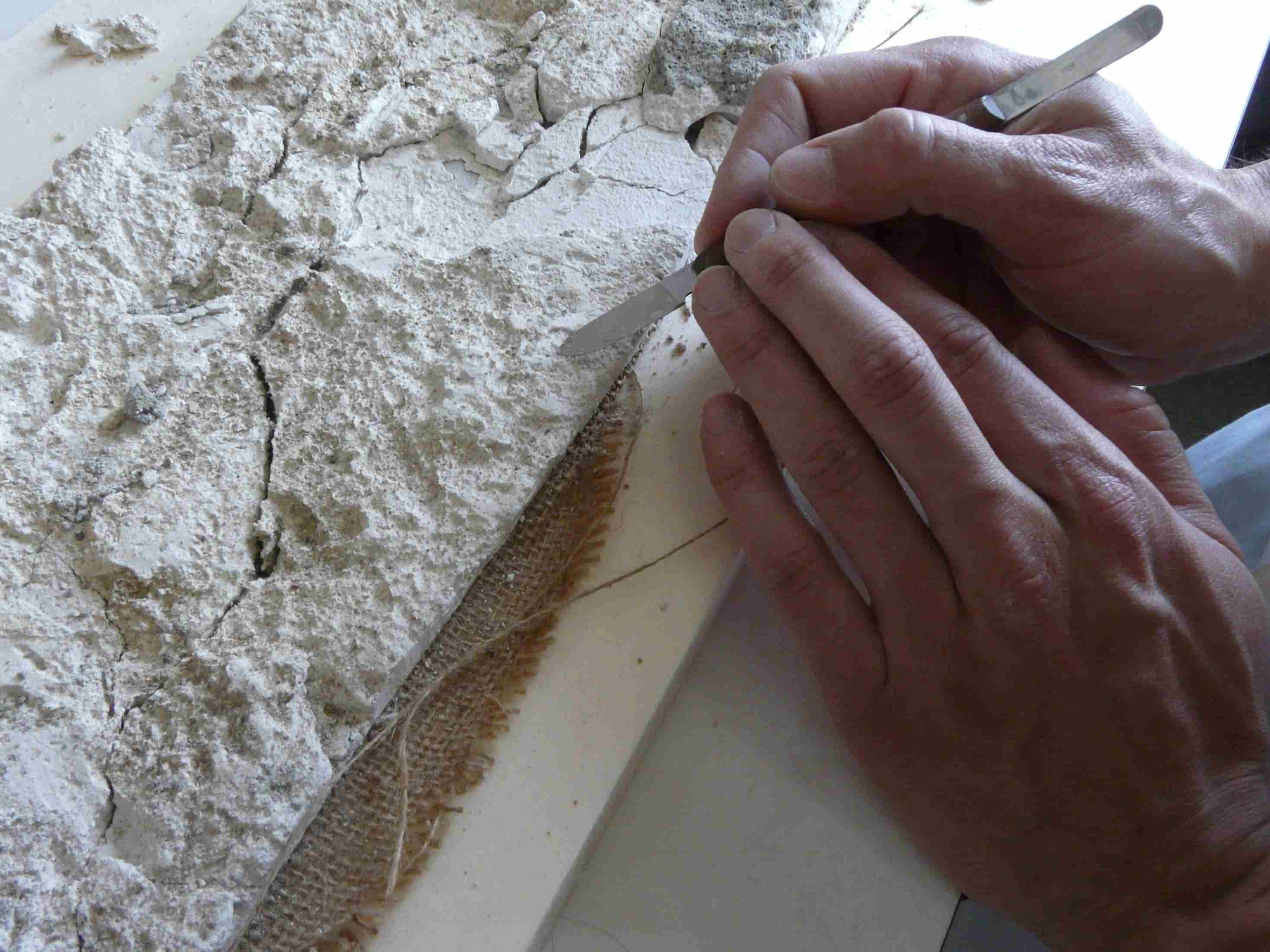 Rebaixat del revers, un cop consolidat (Foto Servei d'Arqueologia)
