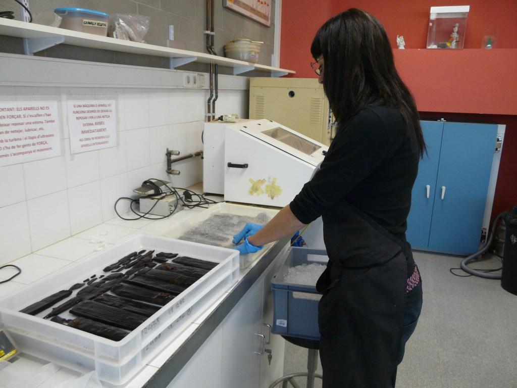 Preparació de safates amb poliacrilat sòdic per a mantenir els objectes humits durant el transport. Foto: SABCN