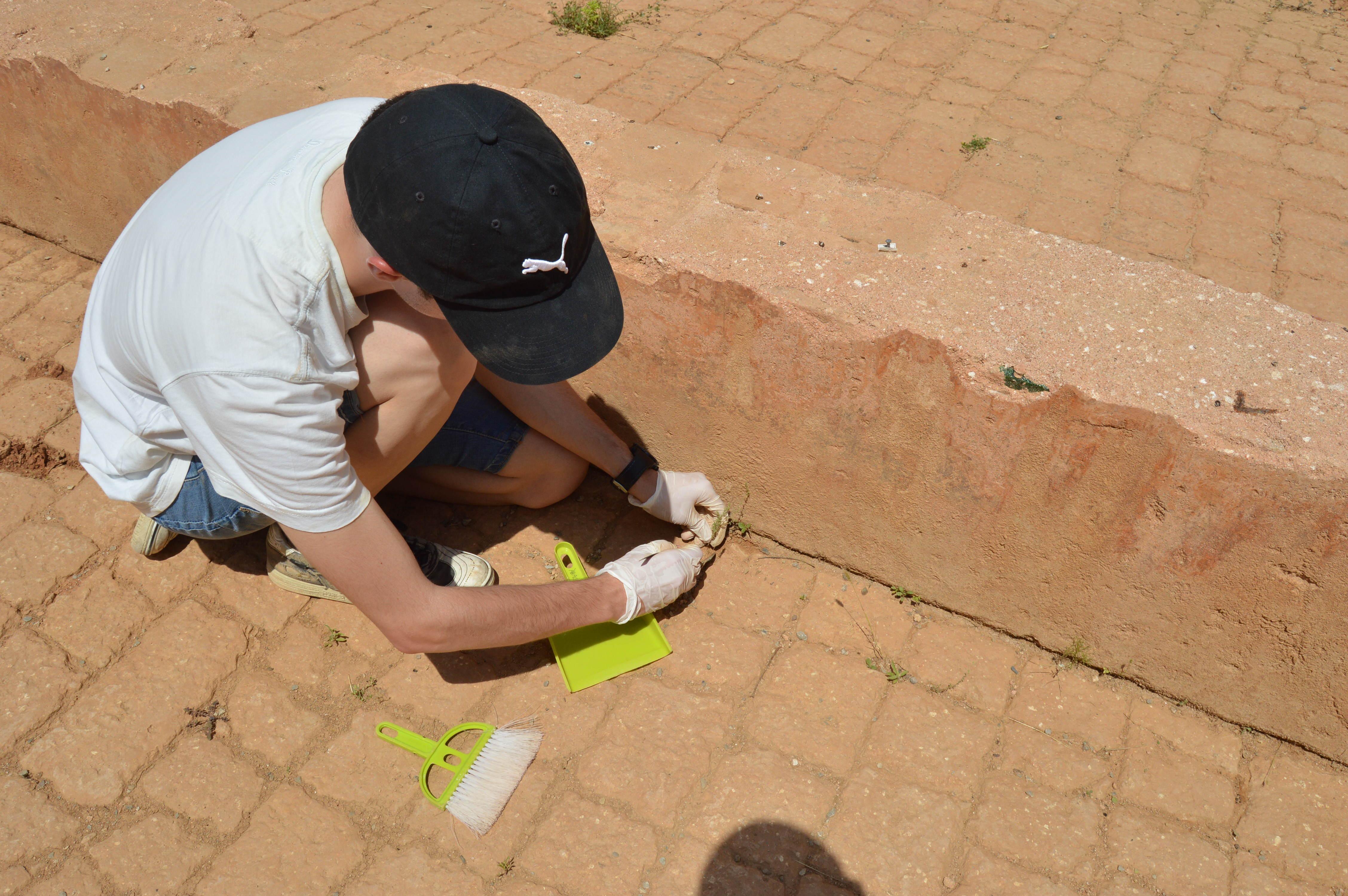 Intervenció de conservació-restauració als Jardins de Victoria de los Ángeles. A la imatge, extracció de plantes superiors les arrels de les quals malmeten junts de murs o afavoreixen la separació dels revestiments, entre d'altres. (Foto: Servei d'Arqueologia)