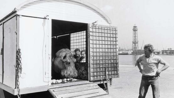 Foto en blanc i negre d'arribada del circ Americà transportant un hipopotam