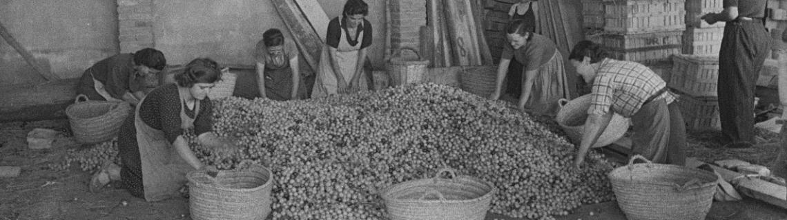 Foto en blanc i negre. Es veuen treballadores amb cistells recollint fruita en un magatzem