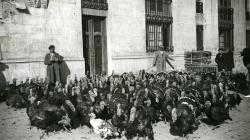 Galls d'indi de camí a la Rambla de Catalunya per la Fira de Nadal. Autor: Carlos Pérez de Rozas, 1933