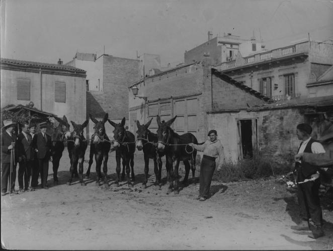 Pati amb mules