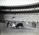 Torero entrenant-se amb un brau a El Torín