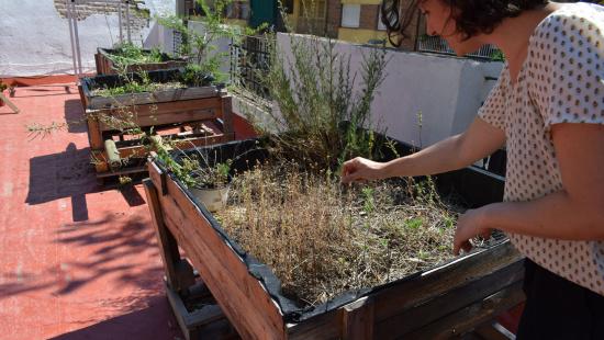 Plantes comestibles a un dels vivers que hi ha sobre la teulada del restaurant