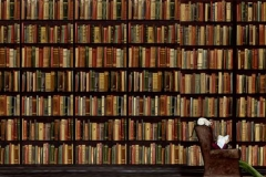 llibreriasanchez_00