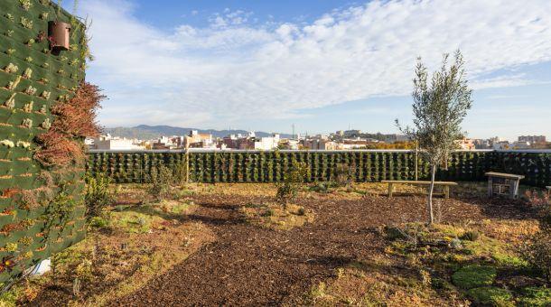 Imatge coberta verda Fra Juníper Serra