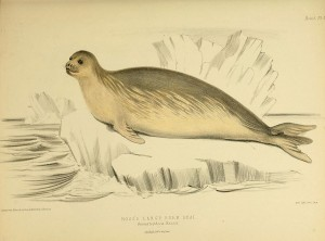 The_zoology_of_the_voyage_of_the_H.M.S._Erebus_and_Terror_(6258362374)