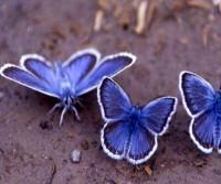 Estamos perdiendo mariposas